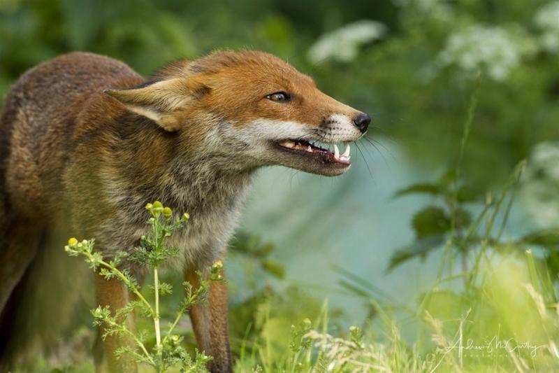 fox-4-2