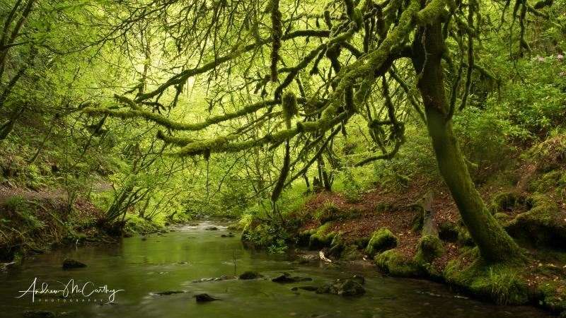 Lydford-Gorge-woods-1