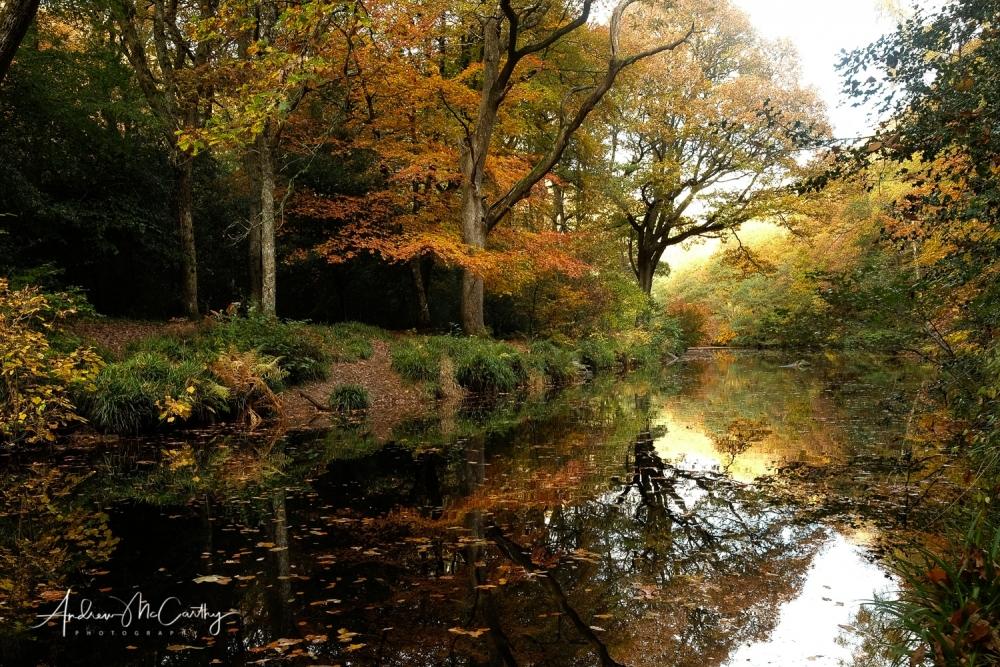 Teign-Autumn-colours
