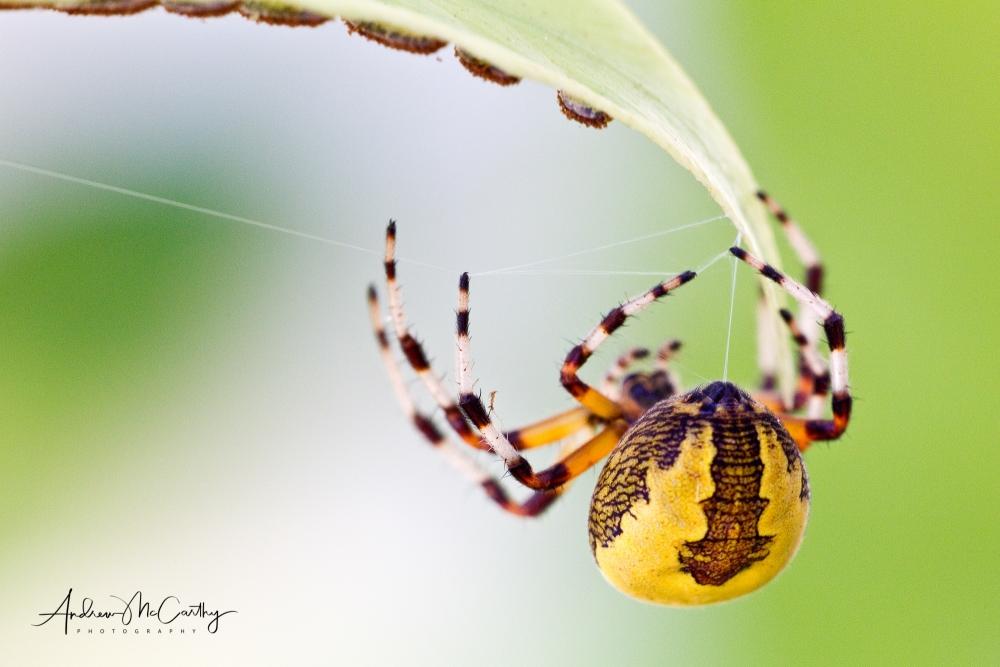 04-spider
